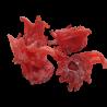 Hibiscus Deshidratado